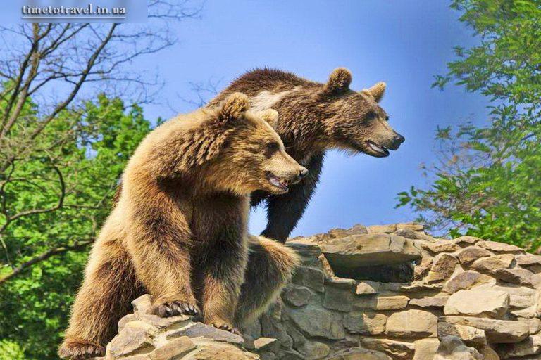 Реабілітаційний центр бурого ведмедя, Синевир, Закарпаття